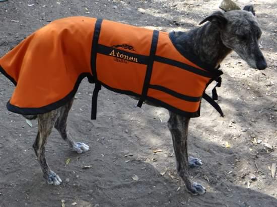Carpas para perros articulos para for Cabezadas para caballos